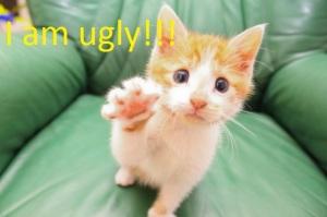 cute-high-five-cat