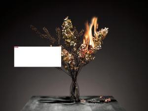 Burning_Flowers_03