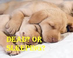 cute-sleeping-dogs-dogs-31464965-251-201