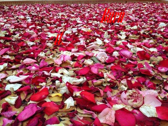 lying-in-a-bed-of-roses