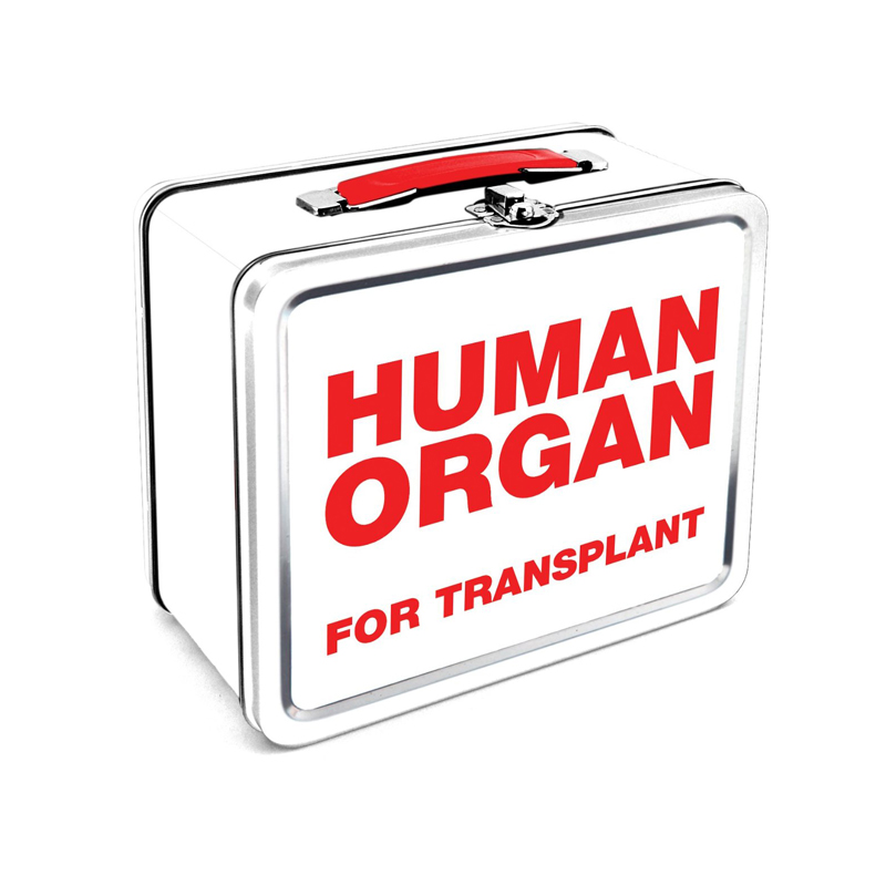 human-organ-lunch-box1